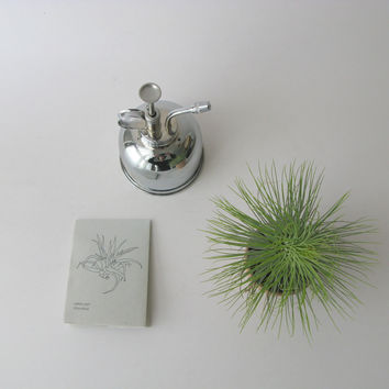 Mr Kitly Airplant Kit