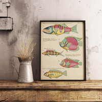 Fish Poster| Sea Life Art| Taxonomy Wall Art| Fishes Wall Art| Fishes Print| Animal Poster| Natural History| Vintage Zoology| HAP016