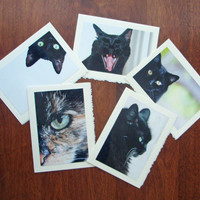 Five Cat Notecards Kitten Cards Nature and Wildlife Photo Note Cards Set II - Free Shipping