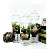 Garden Terrarium Set: Miniature Moss Garden in Decorative Apothecary Jars Wedding Table Centerpiece Fairy Garden