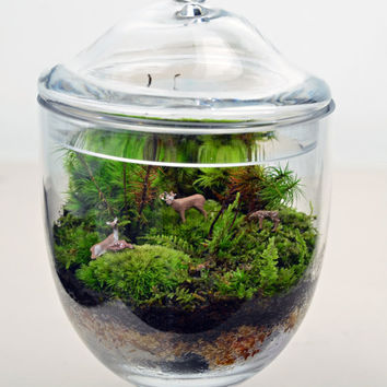 Terrarium // Live Moss // Deer Figures // Miniature Apothecary Jar // Glass Container // Planter // Home and Garden