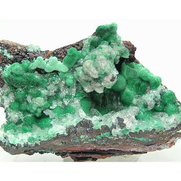Bright Green Malachite with Gypsum Natural Botryoidal Mineral Specimen from Mexico