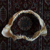 Blue Shark Jaws