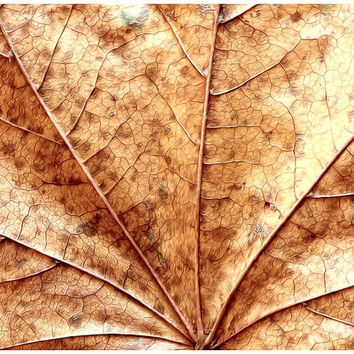Nature photography color photography fall leaf photograph colorful decor rustic brown orange autumn decor wall art photo print fine art