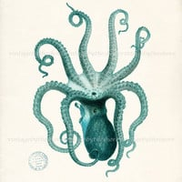 Vintage Teal Octopus Illustration - Natural History Wall Decor Digital Print, 8x10
