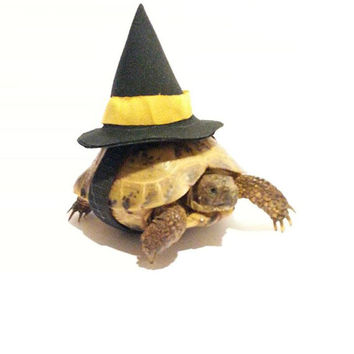 Pet Costume, Tortoise Costume, Witch Hat, Witch Costume, Turtle Costume