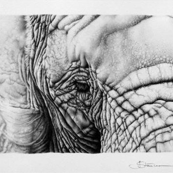 Topography - Elephant Pencil Drawing  Wildlife Animal Fine Art  Print Signed by Artist