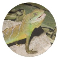 Chinese water dragon plate
