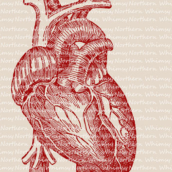 Red Human Heart Illustration - Vintage Anatomy Clip Art – Digital Stamp - Printable Transfer - Creepy Valentine – instant download - CU OK
