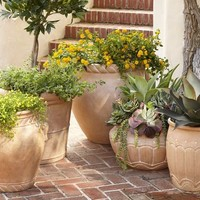 Umbria Planters | Pottery Barn