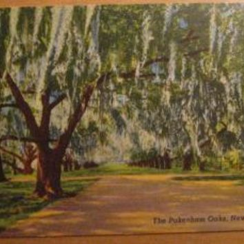Vintage The Pakenham Oaks New Orleans LA Louisiana Postcard