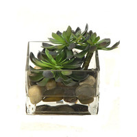Creative Branch WG35122 Succulents Faux Echeveria w/ Acrylic Water