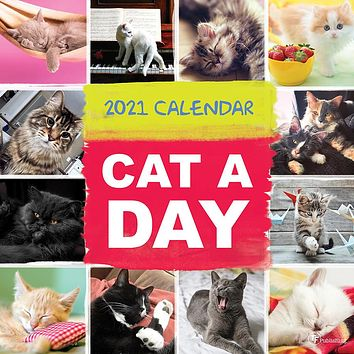 Cat-A-Day Wall