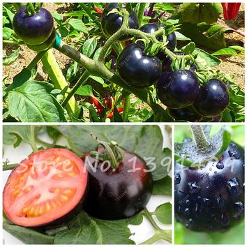 200 Pcs / bag black tomato seeds organic vegetable fruit seeds Resistant to diseases ornamental plant fruit - tree - seedlings