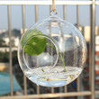 Hot Sale Round hanging glass balls,terrarium kit, water planter, flower vase or home decoration, wedding decoration and etc