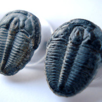 Authentic Trilobite Earrings, On Sale Now, Gift Box Included, Unique Gift Idea, 100% Refund Guarantee