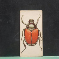 Vintage Japanese Beetle Flash Card Insect Color Illustration Paper Ephemera Art Decor Nature Bugs Collage Crafts Supply