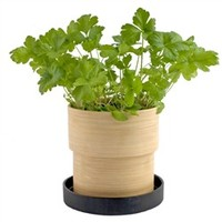 Parsley Bamboo Grow Pot (491562449), Garden Plants | Organic Herbs & Vegetables | Organic Plants & Herbs by Potting Shed Creations | Plants