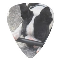 Boston Terrier Guitar Pick