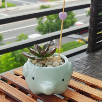 SALE! Blue Elephant ceramic animal pot - succulent planter - mini succulent for home, office decor, and kids (FREE letter charm & succulent)