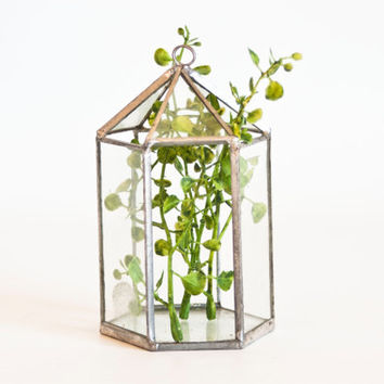 Vintage Hanging Glass Terrarium for Air Plants, Hexagon Geometric Prism Shaped Glass Planter, Indoor Gardening