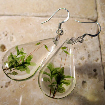Rhizomnium glabrescens teardrop earrings, Moss earring, plant jewelry, leaf jewellery, bryophyte, woodland, forest, nature, surgical steel