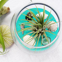 Caribbean Glass Vase Bowl Terrarium Kit with Tillandsia  Air Plant and shells - Lots of sand colors to choose from