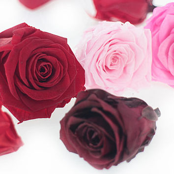 Dried Preserved Roses, 2-5 cm Red Pink Real Immortal Small Flower Immortal Floral Wedding Decoration Home Decor DIY Bouquet Supplies