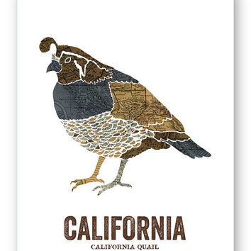 California Quail // California State Bird, Nature Art Print, Vintage Map, State Poster, Folk, Rustic, Outdoor, Country, Reproduction Print
