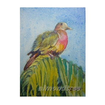 ACEO Pink Necked Pigeon, not a print, id1320285 affordable collection Watercolor Painting miniature art nature Bird