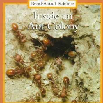 Inside an Ant Colony (Rookie Read-About Science)