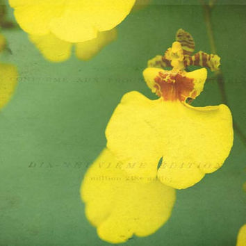 Float yellow flower photography orchid print by joystclaire