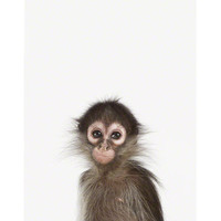Baby Monkey Close-Up - The Animal Print Shop by Sharon Montrose