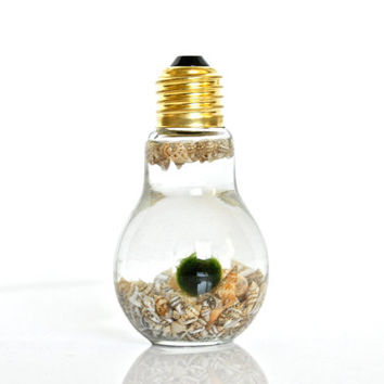SALE Underwater Marimo Moss Ball in Light Bulb Shaped Vase, Sea Shell Home Decor Sea Shell Decor, Nature Gift Green Gift, Unique Table Decor