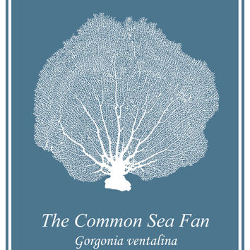 White Sea Fan on Mid-Century Blue - Sea Life - Coastal Print - Sea Creatures - Beach House Wall Art - Coastal Decor - Nautical Art