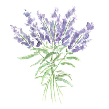 original flower painting ,flower watercolor, flower art, lavender herbs, herb painting, kitchen painting, kitchen art, herb art, 8X10