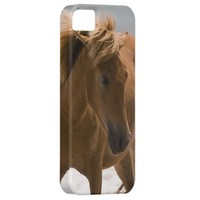 Sweet Brown Horse With Flowy Mane iPhone 5 Case