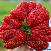 300pcs bag giant strawberry seeds red strawberry Organic Heirloom fruit vegetable seeds bonsai potted plant for home garden