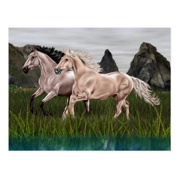 Buckskin and Palomino Horse Postcard