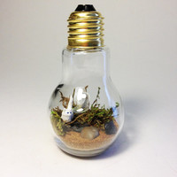 Recycled Kitten Light bulb Terrarium