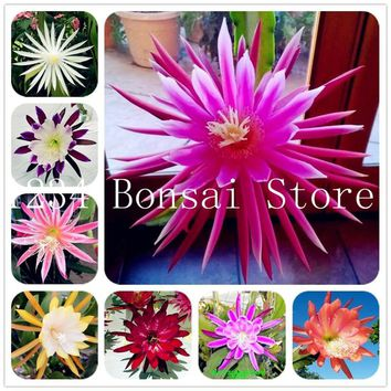 100 pcs Rare Cactus Flower plants Japanese Epiphyllum Succulents plants Flower Sementes Bonsai plants Indoor Plants Flowers Pot