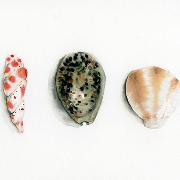 seashell art, Summer cottage Decor, seashell, minimalist, cottage chic, beach house, ocean