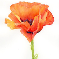 Watercolor poppy print, red poppy painting, poppy flower watercolor, flower wall art, orange poppy art, floral wall decor, 8x10 flower print