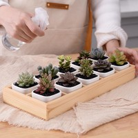 Square Succulent Planters and Wooden Tray