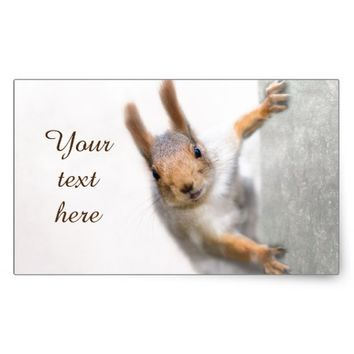 Curious squirrel rectangular sticker