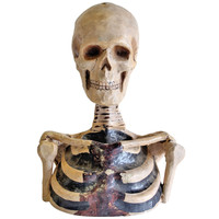 1800's Original Odd Fellows Paper Mache Skeleton Bust