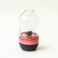 Agrestis - Ceramic & Glass terrarium / planter - Standard - Rose and Matte Black