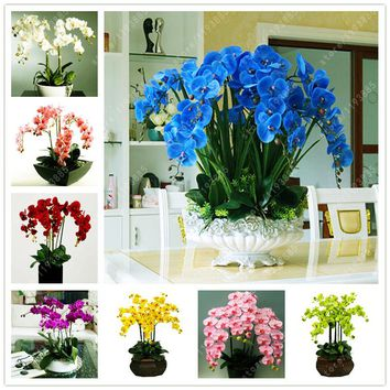 50 pcs/bag bonsai flower orchid seeds, beautiful phalaenopsis orchid home garden plant orchid pot quality flower seeds kids gift