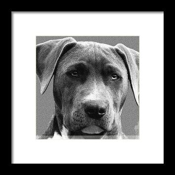 The Loyalist   Compassion - Framed Print