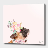 «Koko» Aluminum Print by Suzanne Carter - Numbered Edition from $74.9 | Curioos